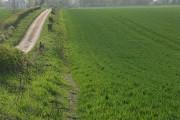 Farmland and lane, Hatherden