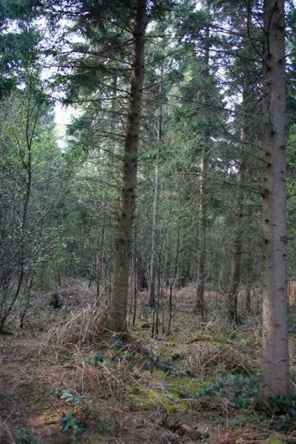 Fenn's Wood