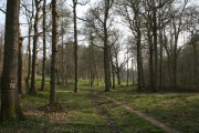 Denge Wood