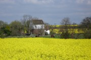 Rape field looking north to Evegate mill