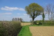 Footpath, Rank's Green