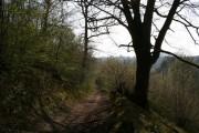 Path through Denge Wood