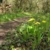 Llwybr bach.  The narrow path.