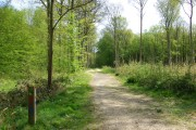 Dering Wood - main path
