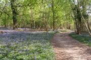 Path through Calveslease Copse, Roydon Woods, New Forest