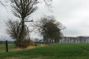 Barley fields, Marchbank