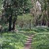 Woodland path near Coombe