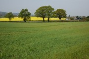Farmland near Church House Farm, Collingwood
