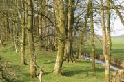 Woodland, Hotts