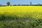 Farmland near Newton Harcourt