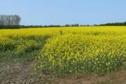 Farmland south of Great Glen
