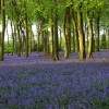 Park Wood