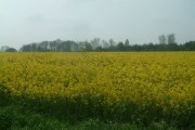 Over the Rapeseed to Walton Wood