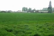 Chivel Farm