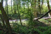 Woodland close to Northiam