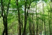 Maplehurst Wood