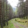 Blarnabee Wood
