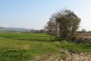 Winter crops, Staunton