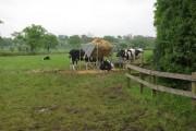 Farmland near Marston Montgomery