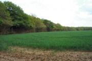 Shortgrove Wood