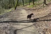 Callie in Borsdane Woods