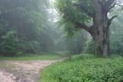 Woods near My Lady's Seat