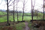 Looking out of Westy Bank Wood towards Bolton Abbey