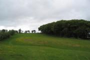 Small oak wood on side of Bradnor Hill