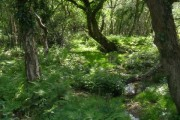 Stream and woodland, Badminston Common