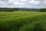 Farmland near Kington