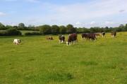 Pastures, Kimpton