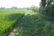 Macmillan Way through the fields