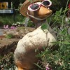 Horley duck with sunglasses