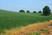 Farmland, Little Coxwell