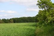 Wood and farmland, Buscot