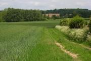Farmland, Watchfield