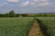 Footpath through wheat, Woolstone