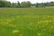Meadow, Watchfield