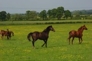 Horses at Highworth