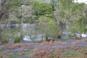 Banks of the Beauly