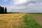Fields near to Ramsey Mereside