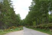 Road through Balzeach Forest