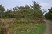 Woodland on Longridge Fell