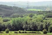 Snathurst Wood