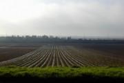 Forty Acres farm Bedhampton