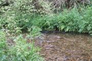 River Quarme near Bushel Bridge