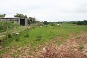 Sheep at Aston Bank Farm