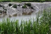 Dutch River & Decoy Farm