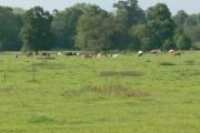 Farmland close to Stoughton, Leicestershire