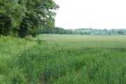 Crop Fields near Linleygreen, Shropshire
